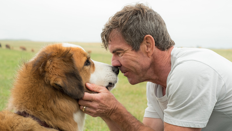 Viewpoint Project Dennis Quaid A Dogs Journey